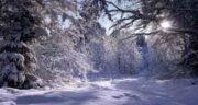 تعبیر خواب جنگل برفی ؛ معنی دیدن جنگل برفی در خواب های ما چیست