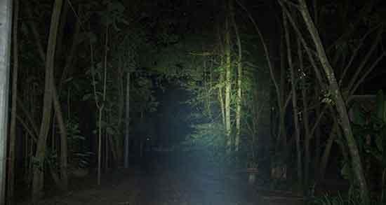 تعبیر خواب جنگل تاریک ؛ معنی دیدن جنگل تاریک در خواب های ما چیست