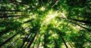 تعبیر خواب جنگل سرسبز زیبا ؛ معنی دیدن جنگل سرسبز زیبا در خواب های ما چیست