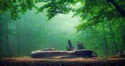 تعبیر خواب جنگل سرسبز ؛ معنی دیدن جنگل سرسبز در خواب های ما چیست