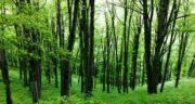 تعبیر خواب جنگل منوچهر مطیعی ؛ حضرت یوسف و امام صادق و ابن سیرین