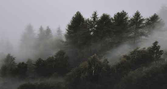 تعبیر خواب جنگل مه الود ؛ معنی دیدن جنگل مه الود در خواب های ما چیست