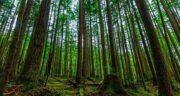 تعبیر خواب جنگل و درخت ؛ معنی دیدن جنگل و درخت در خواب های ما چیست