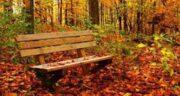 تعبیر خواب جنگل پاییزی ؛ معنی دیدن جنگل پاییزی در خواب های ما چیست