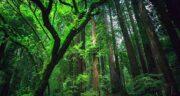 تعبیر خواب دویدن در جنگل ؛ معنی دویدن در جنگل در خواب های ما چیست