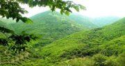 تعبیر خواب دیدن جنگل سرسبز ؛ معنی دیدن جنگل سرسبز در خواب های ما چیست