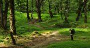 تعبیر خواب راه رفتن در جنگل ؛ معنی راه رفتن در جنگل در خواب های ما چیست