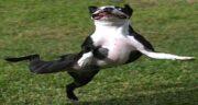 تعبیر خواب رقص سگ ، معنی رقصیدن سگ در خواب چیست