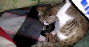 تعبیر خواب زایمان گربه ؛ معنی دیدن زایمان گربه در خواب های ما چیست