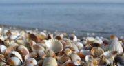 تعبیر خواب صدف حلزونی ؛ معنی دیدن صدف حلزونی در خواب های ما چیست