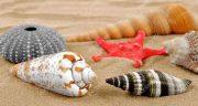 تعبیر خواب صدف های رنگی ؛ معنی دیدن صدف های رنگی در خواب ما چیست