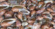 تعبیر خواب صدف و گوش ماهی ؛ معنی دیدن صدف و گوش ماهی در خواب چیست