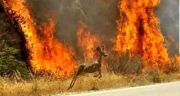 تعبیر خواب فرار از آتش ؛ معنی فرار کردن از آتش در خواب چیست