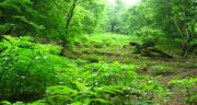 تعبیر خواب قدم زدن در جنگل ؛ معنی قدم زدن در جنگل در خواب های ما چیست