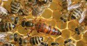 تعبیر خواب ملکه ؛ معنی دیدن ملکه زنبور در خواب های ما چیست