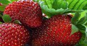 تعبیر خواب میوه توت فرنگی ؛ معنی دیدن میوه توت فرنگی در خواب چیست