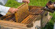تعبیر خواب کندوی پر از عسل ؛ معنی دیدن کندوی پر از عسل در خواب چیست