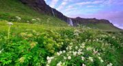 تعبیر خواب کوه و سبزه ؛ معنی دیدن کوه و سبزه در خواب های ما چیست