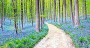 تعبیر خواب گم شدن در جنگل ؛ معنی گم شدن در جنگل در خواب های ما چیست
