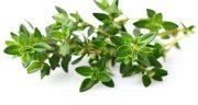 تعبیر خواب گیاه آویشن ؛ معنی دیدن گیاه آویشن در خواب های ما چیست
