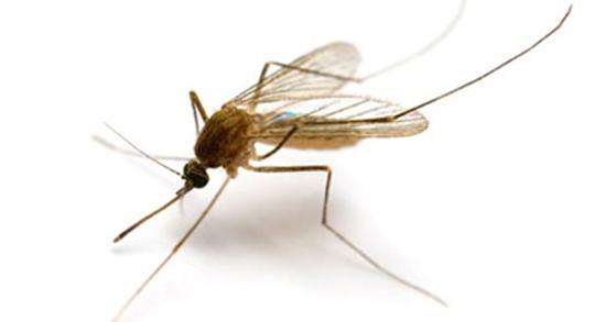 تعبیر خواب پشه عسل ، معنی دیدن پشه عسل در خواب های ما چیست