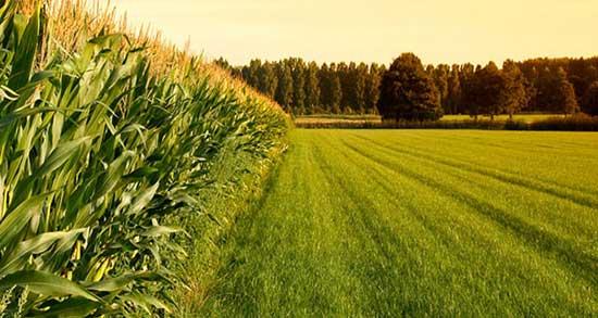 تعبیر خواب اب در زمین کشاورزی ، معنی دیدن اب در زمین کشاورزی در خواب