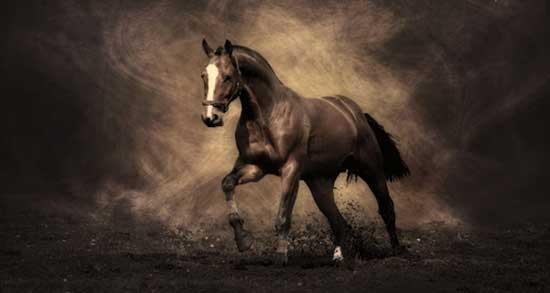 تعبیر خواب اسب مشکی ، معنی دیدن اسب مشکی در خواب های ما چیست