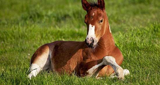 تعبیر خواب اسب سفید امام حسین ، معنی دیدن اسب سفید امام حسین در خواب