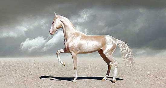 تعبیر خواب اسب و گاو ، معنی دیدن اسب و گاو در خواب های ما چیست