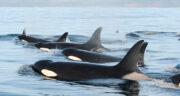 تعبیر خواب دیدن نهنگ ، معنی دیدن نهنگ در خواب های ما چیست