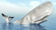 تعبیر خواب دیدن نهنگ در اب ، معنی دیدن نهنگ در اب در خواب های ما چیست