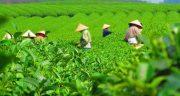 تعبیر خواب دیدن زمین کشاورزی ، معنی دیدن زمین کشاورزی در خواب ما چیست