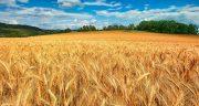 تعبیر خواب فروختن زمین کشاورزی ، معنی دیدن فروختن زمین کشاورزی در خواب