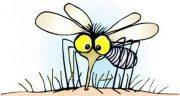 تعبیر خواب حشره در گوش ، معنی دیدن حشره در گوش در خواب های ما چیست