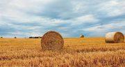 تعبیر خواب کشاورزی امام صادق ، معنی دیدن کشاورزی امام صادق در خواب