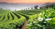 تعبیر خواب کشاورزی کردن ، معنی دیدن کشاورزی کردن در خواب ما چیست