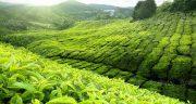 تعبیر خواب کشاورزی سرسبز ، معنی دیدن کشاورزی سرسبز در خواب