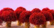 تعبیر خواب خرید زعفران ، معنی دیدن خرید زعفران در خواب های ما چیست