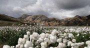 تعبیر خواب خرید زمین کشاورزی ، معنی دیدن خرید زمین کشاورزی در خواب