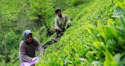 تعبیر خواب خریدن زمین کشاورزی ، معنی دیدن خریدن زمین کشاورزی در خواب
