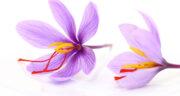 تعبیر خواب خوردن شربت زعفران ، معنی دیدن خوردن شربت زعفران در خواب