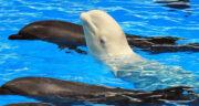 تعبیر خواب کوسه و نهنگ ، معنی دیدن کوسه و نهنگ در خواب های ما چیست