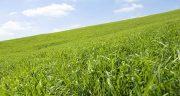 تعبیر خواب مزرعه سبز ، معنی دیدن مزرعه سبز در خواب های ما چیست