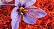 تعبیر خواب مزرعه زعفران ، معنی دیدن مزرعه زعفران در خواب های ما چیست