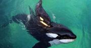 تعبیر خواب نهنگ در آب ، معنی دیدن نهنگ در آب در خواب های ما چیست