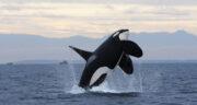 تعبیر خواب نهنگ در خانه ، معنی دیدن نهنگ در خانه در خواب های ما چیست