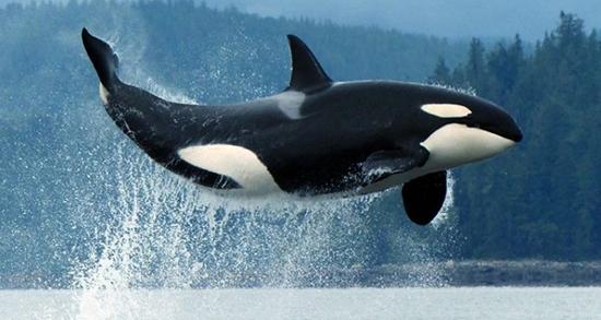 تعبیر خواب نهنگ در ساحل ، معنی دیدن نهنگ در ساحل در خواب های ما چیست