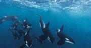 تعبیر خواب نهنگ مرده ، معنی دیدن نهنگ مرده در خواب های ما چیست