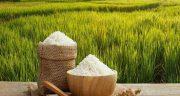 تعبیر خواب نشاکاری برنج ، معنی دیدن نشاکاری برنج در خواب های ما چیست