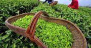 تعبیر خواب شخم زدن زمین کشاورزی ، معنی دیدن شخم زدن زمین کشاورزی